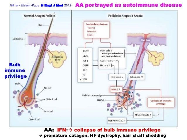 Alopecia Areata: Autoimmune Disease or Hair Follicle Response Pattern to Immunological Damage? Slide 3