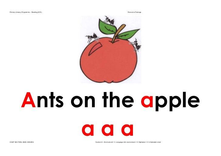 Alphabetchant ants on apple (2)