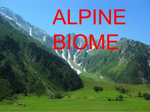 Alpine Biome on Tundra Food Chain Pictures