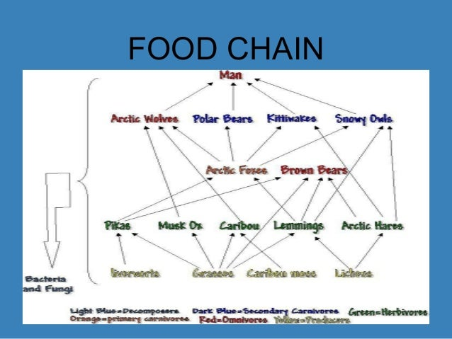 Mountain Goat Food Chain Diagram Auto Electrical Wiring Diagram