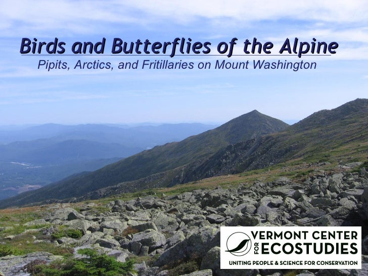 Birds and Butterflies of the Alpine Pipits, Arctics, and Fritillaries on Mount Washington