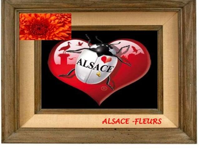 ALSACE -FLEURS