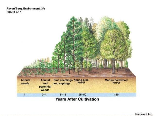 ecological succession 23 638?cb=1448724205 ecological succession