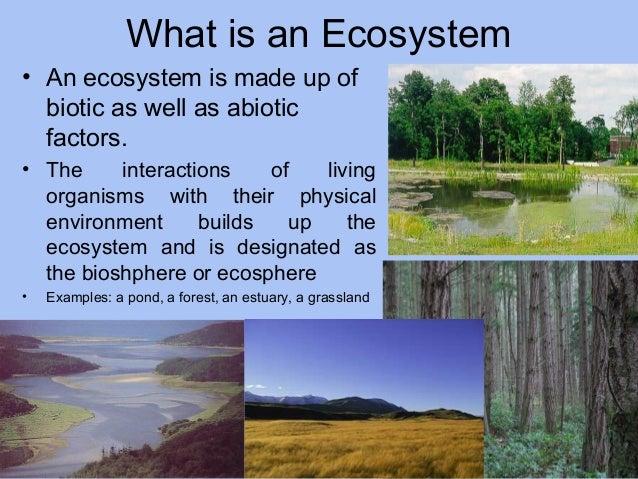 ecosystem