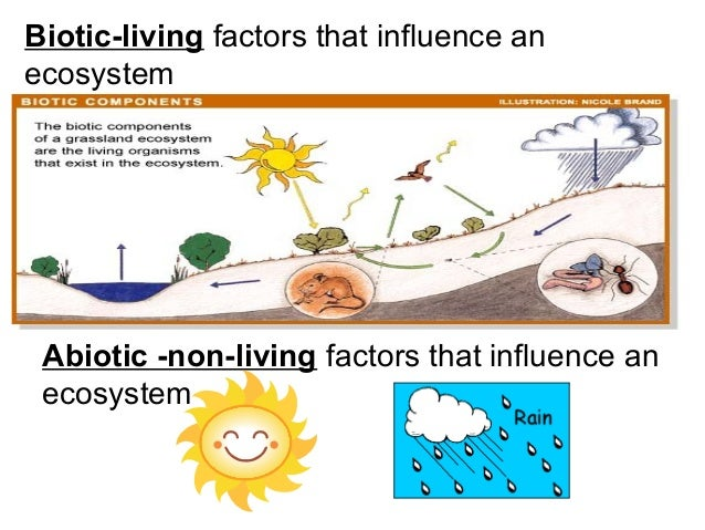 the factors of the diversity of life in an environment Nature, nurture, and human diversity chapter 3 psy12000  environment 15 genes: our codes for life chromosomes containing dna (deoxyribonucleic acid) are situated in the nucleus of a cell 16  socializing factors also play an important role although raised in the same family.