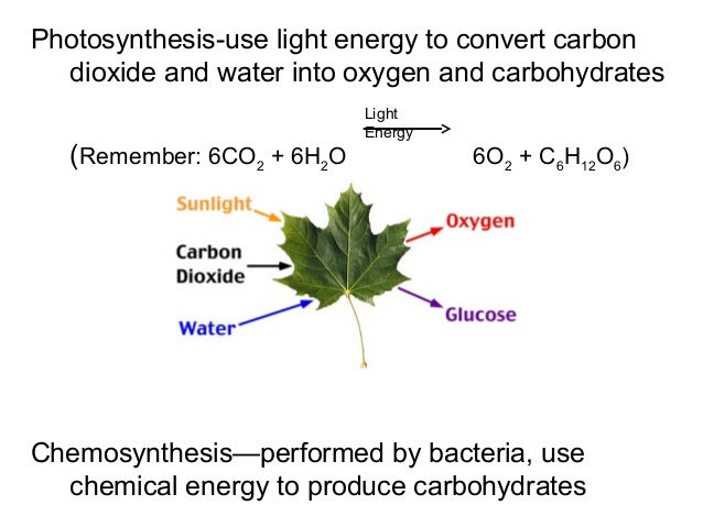 does chemosynthesis produce oxygen Meaning that it is the process in which carbohydrates are chemically produced by  some organisms in the absence of sunlight  this process is highly utilized by  organisms living in very deep sea or in underground caverns.