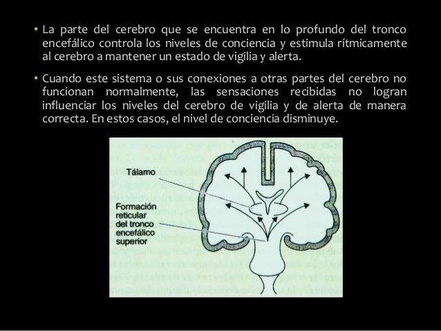 Alteraciones de la conciencia estupor y coma Slide 3