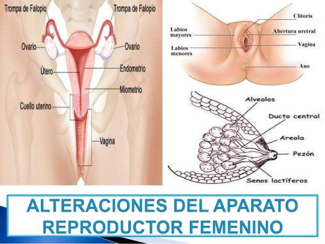 alteraciones del aparato reproductor femenino alteraciones uterinas