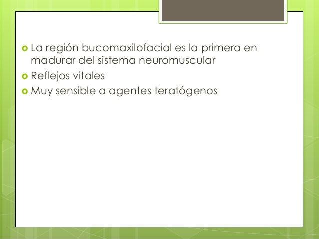 La región bucomaxilofacial es la primera en madurar del sistema neuromuscular  Reflejos vitales  Muy sensible a agente...