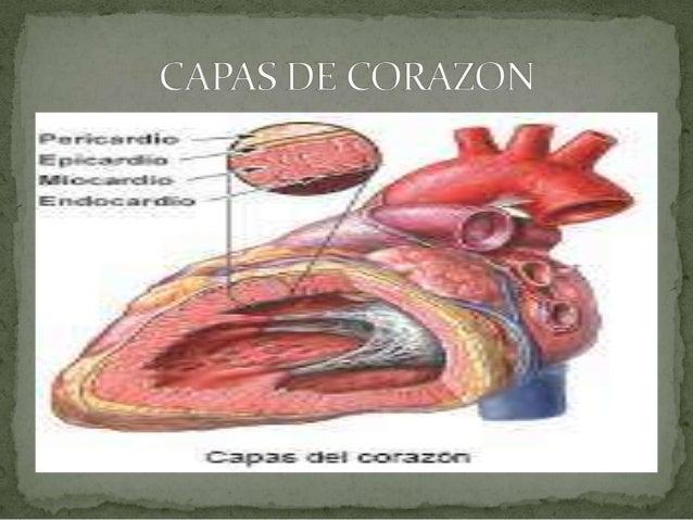 Alteraciones en la anatomia cardiaca Slide 3