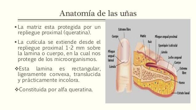 Alteraciones uñas. semiolog