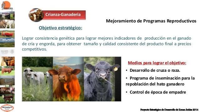 Alternativas para mejorar la eficiencia reproductiva de los bovinos carne Slide 2