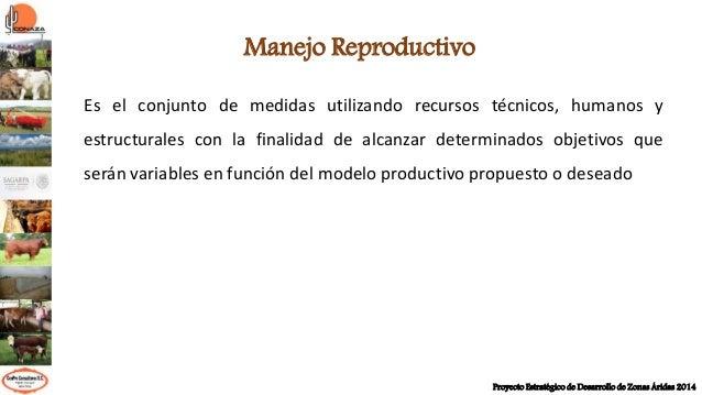 Alternativas para mejorar la eficiencia reproductiva de los bovinos carne Slide 3