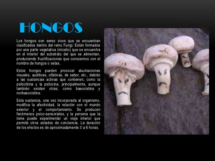 HONGOSLos hongos son seres vivos que se encuentranclasificados dentro del reino Fungi. Están formadospor una parte vegetat...
