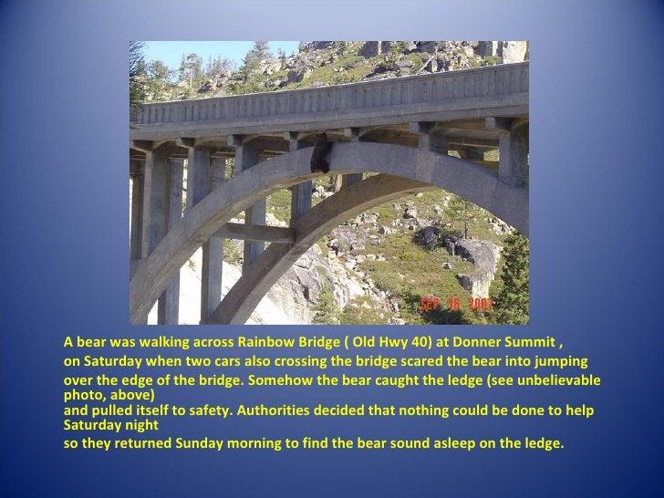 <ul><li>A bear was walking across Rainbow Bridge ( Old Hwy 40) at Donner Summit ,  </li></ul><ul><li>on Saturday when two ...