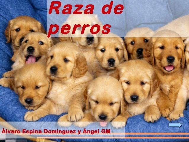 Raza de perros Álvaro Espina Dominguez y Ángel GM