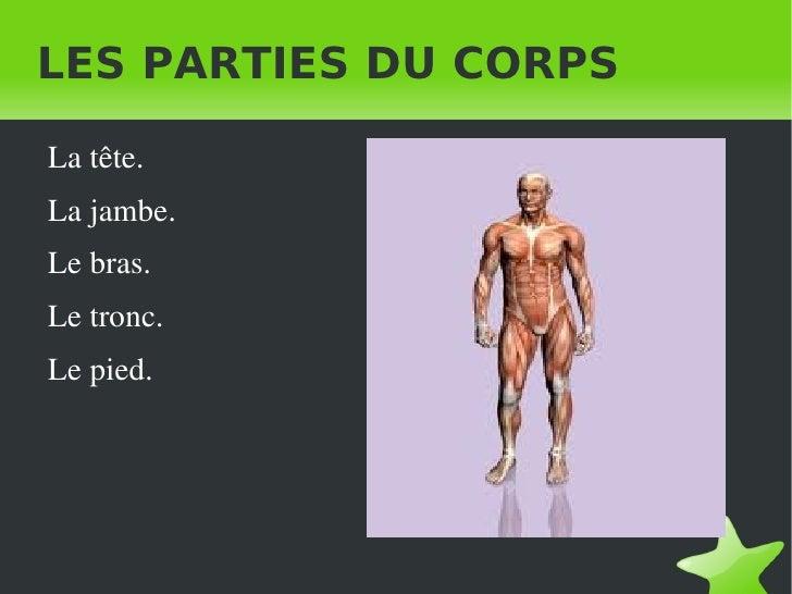 LES PARTIES DU CORPS <ul><li>La tête.