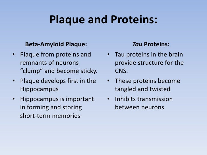 """Plaque and Proteins:<br />Beta-Amyloid Plaque:<br />Plaque from proteins and remnants of neurons """"clump"""" and become sticky..."""