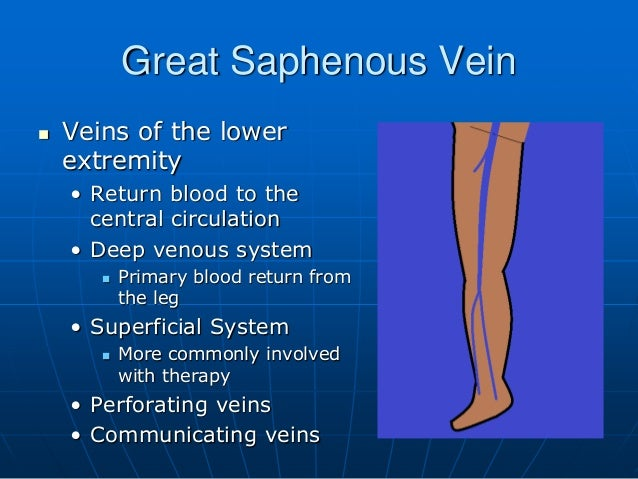 The Great Saphenous Vein