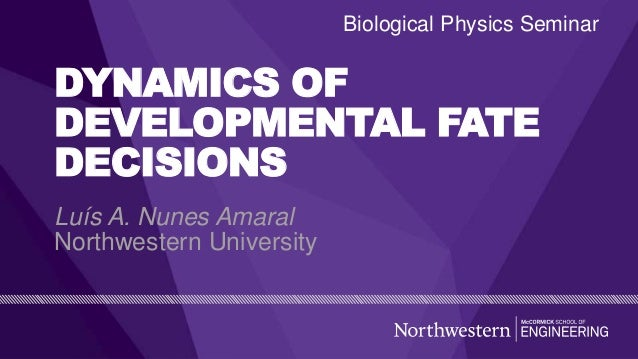 DYNAMICS OF DEVELOPMENTAL FATE DECISIONS Luís A. Nunes Amaral Northwestern University Biological Physics Seminar