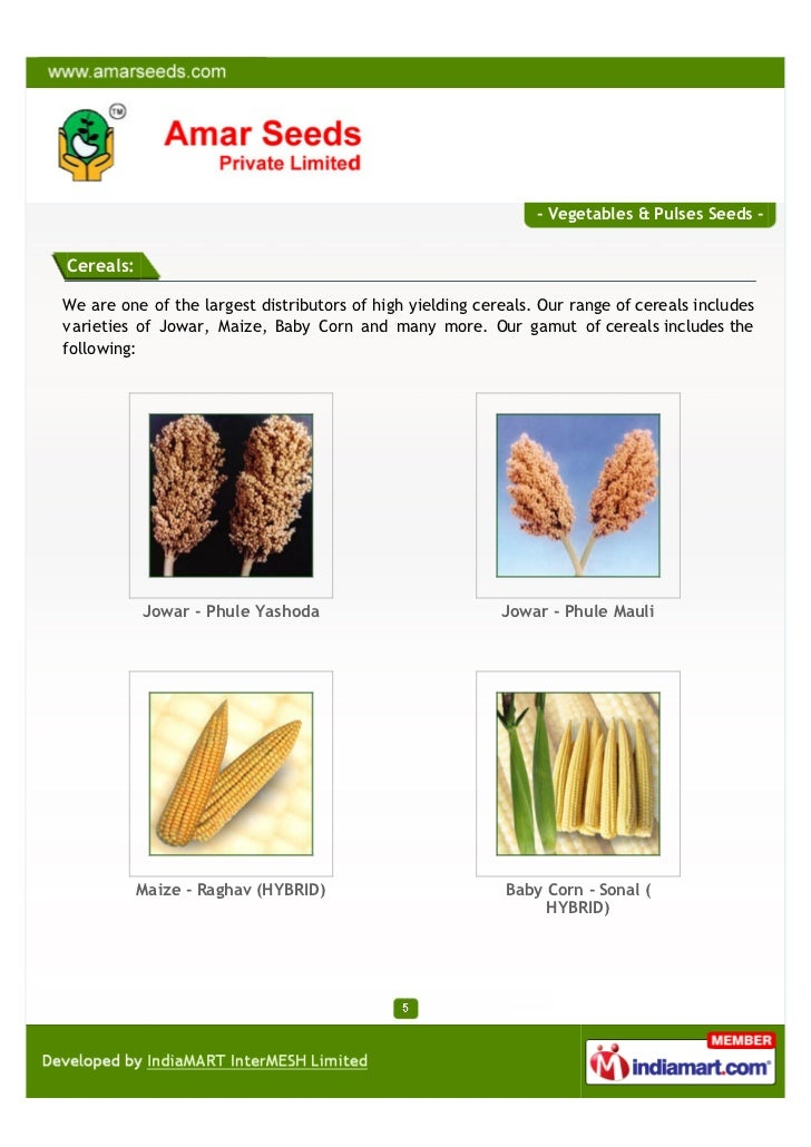 - Vegetables & Pulses Seeds -Cereals:We are one of the largest distributors of high yielding cereals. Our range of cereals...