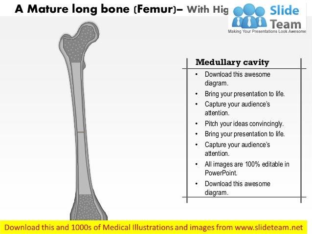 a mature long bone medical images for powerpoint. Black Bedroom Furniture Sets. Home Design Ideas