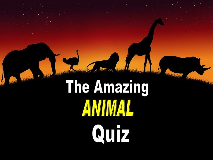 Animal Questions And Answers For Kids