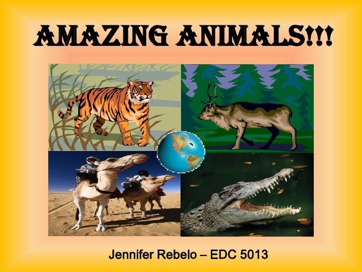 Amazing Animals!!!    Jennifer Rebelo – EDC 5013