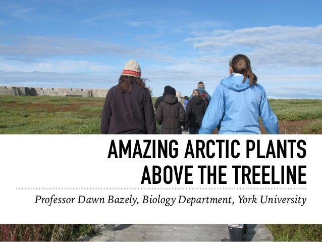 AMAZING ARCTIC PLANTS ABOVE THE TREELINE Professor Dawn Bazely, Biology Department, York University