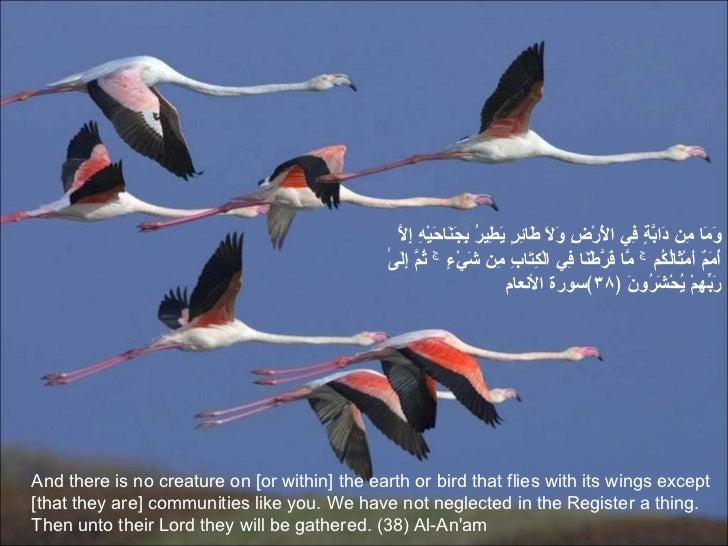 Image result for و ما من دابة فى الارض و لا طائر یطیر