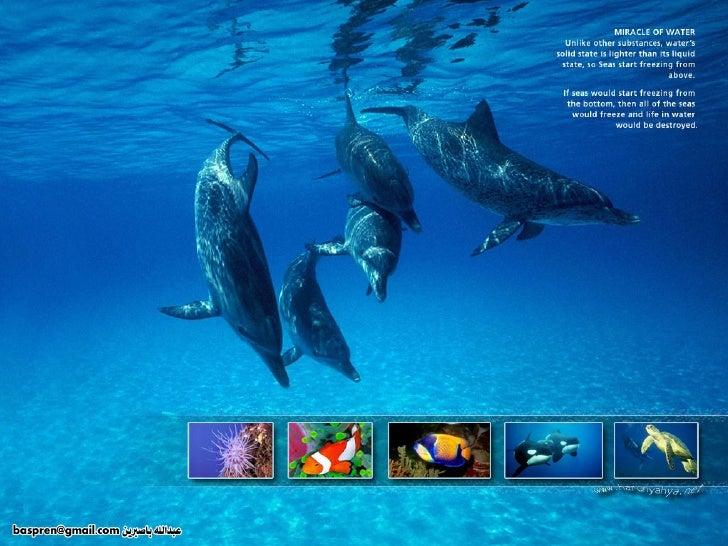 Amazing Creatures Water