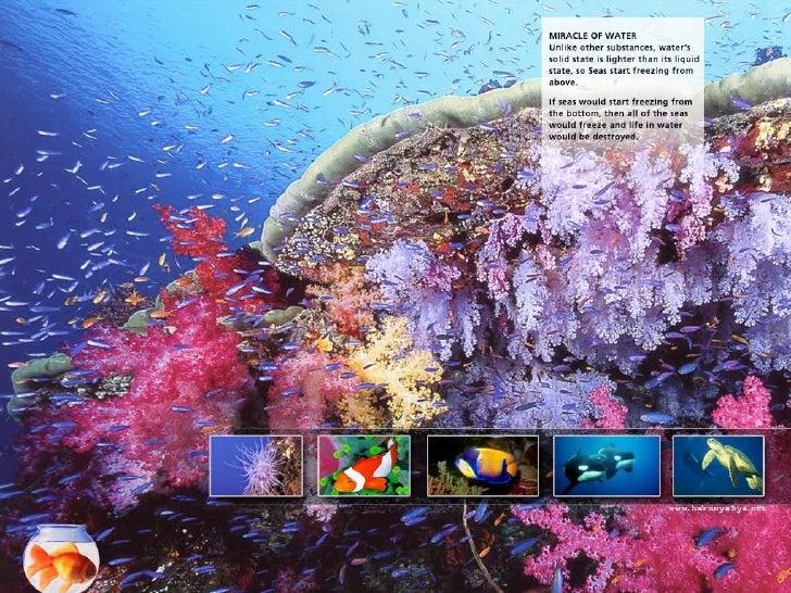 Amazing Creatures Water Slide 2