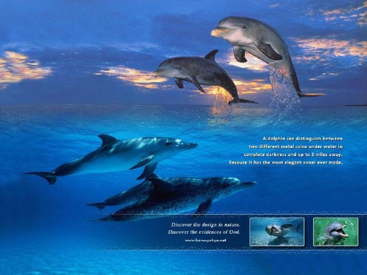 Amazing Creatures Water Slide 3