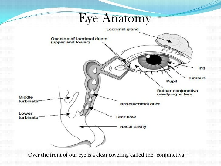 Amazing Facts About Our Eyes