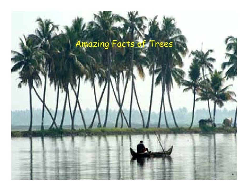 Amazing Facts of Trees