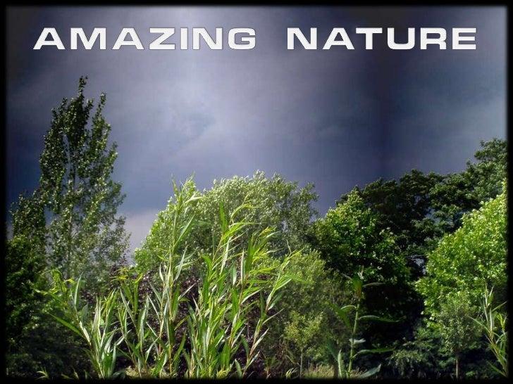 AMAZING NATURE<br />
