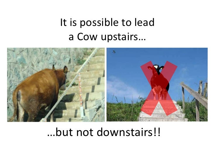 It is possible to lead a Cow upstairs…<br />…but not downstairs!!<br />