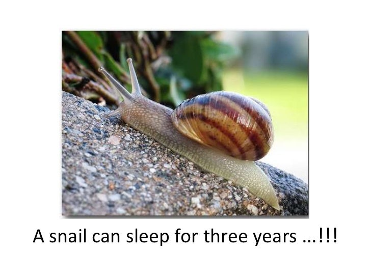 A snail can sleep for three years …!!!<br />