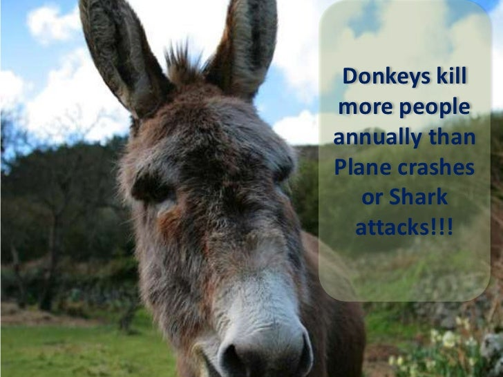 Donkeys kill more people annually than Plane crashes or Shark attacks!!! <br />