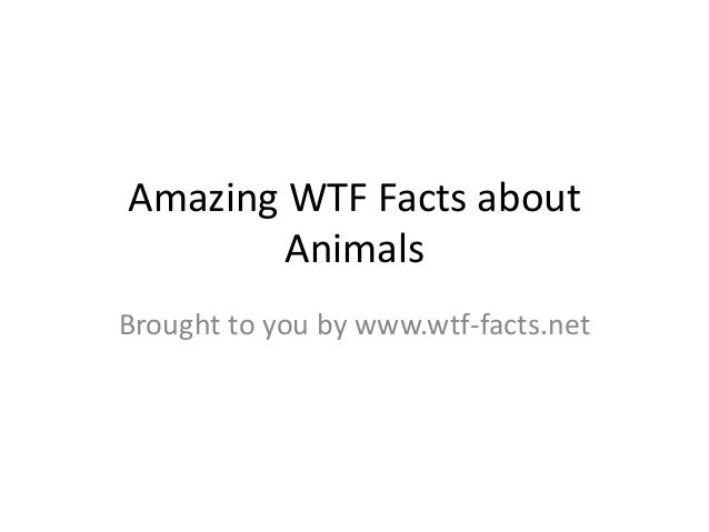 Amazing WTF Facts about Animals Brought to you by www.wtf-facts.net