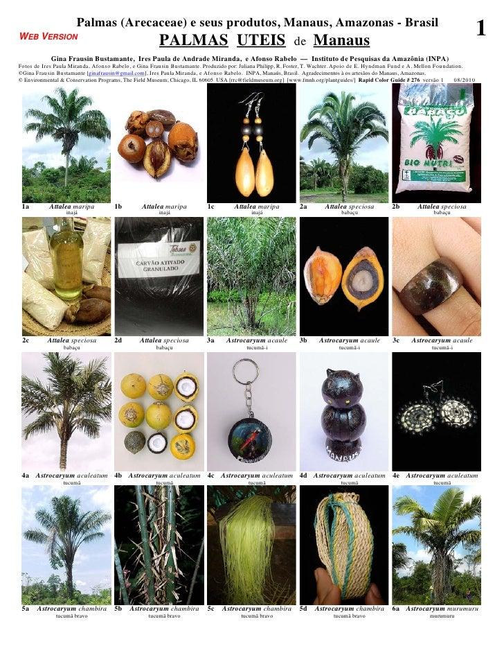 Amazonas  - manaus useful palms