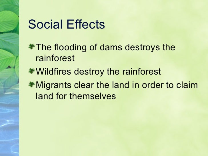 causes and effects of the amazons deforestation There are thousands of species in the sumatra forest who are being affected by deforestation many of the food and products used today contribute to the deforestation of one of the largest rainforests in the world although it is hard to pinpoint one cause of deforestation there are a few that stand out.