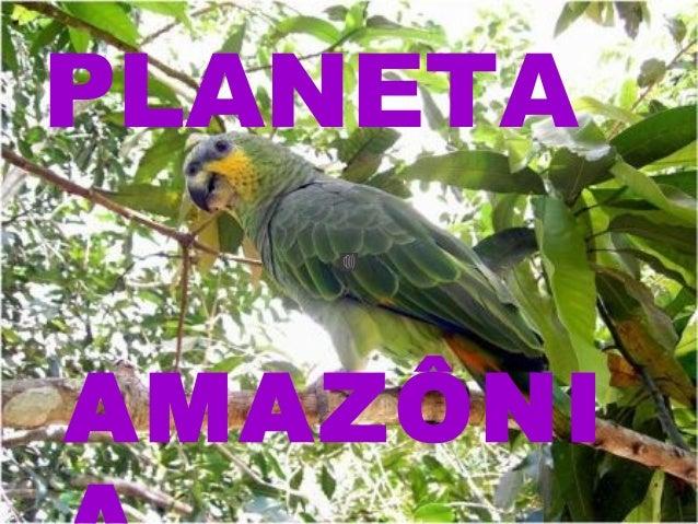 AMAZÔNI PLANETA
