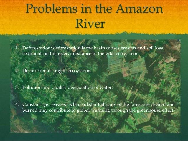 The Yanomamo Culture Essay