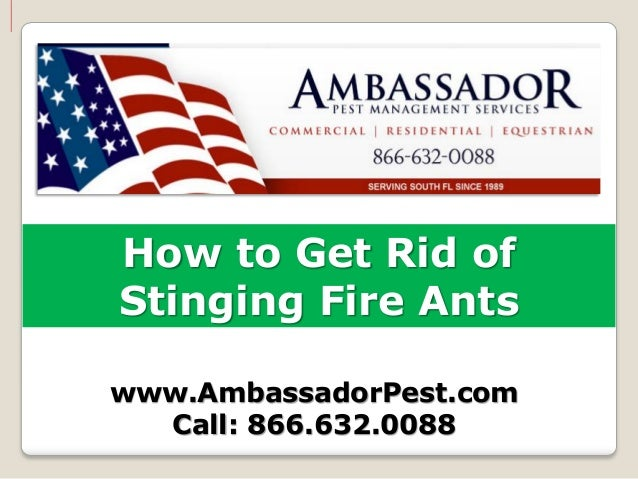 How to Get Rid ofStinging Fire Antswww.AmbassadorPest.com  Call: 866.632.0088