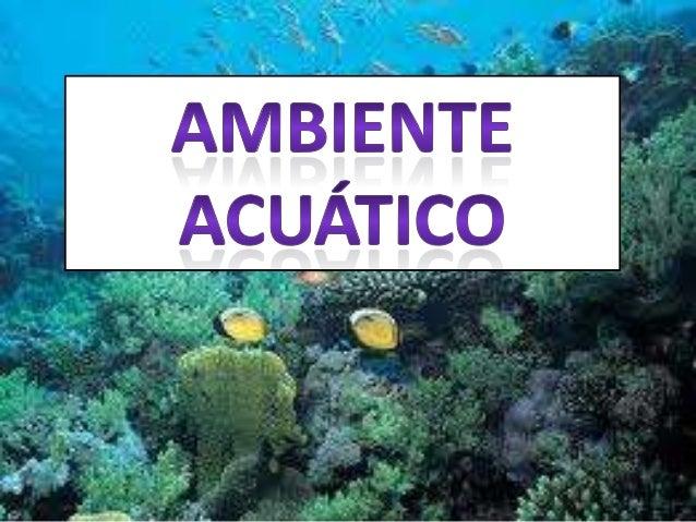 • Un ambiente acuático es un ambiente bajo el agua ideal o no para los seres vivos que habitan en él, como plantas acuátic...