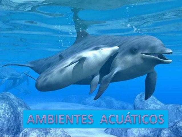 Que es un ambiente acuático • Un ambiente acuático puede ser océanos, mares, ríos y lagos en esas superficies de agua pued...