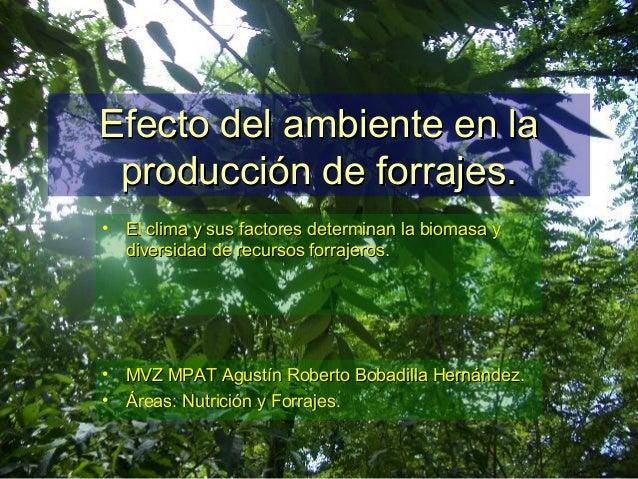 Efecto del ambiente en laEfecto del ambiente en la producción de forrajes.producción de forrajes. • El clima y sus factore...