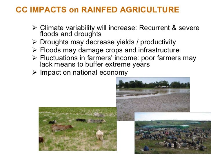 CC IMPACTS on RAINFED AGRICULTURE <ul><li>Climate variability will increase: Recurrent & severe floods and droughts </li><...