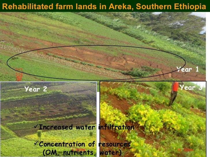 Rehabilitated farm lands in Areka, Southern Ethiopia Year 1 Year 3 Year 2 <ul><li>Increased water infiltration </li></ul><...